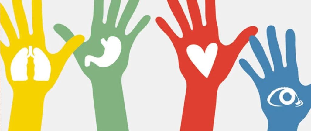 10 mitos sobre la donación de órganos.
